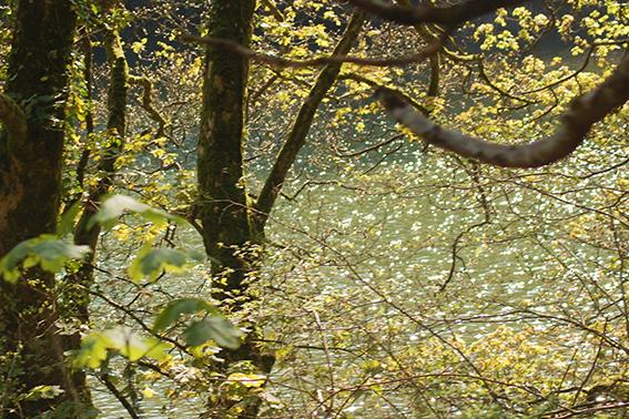 river6web