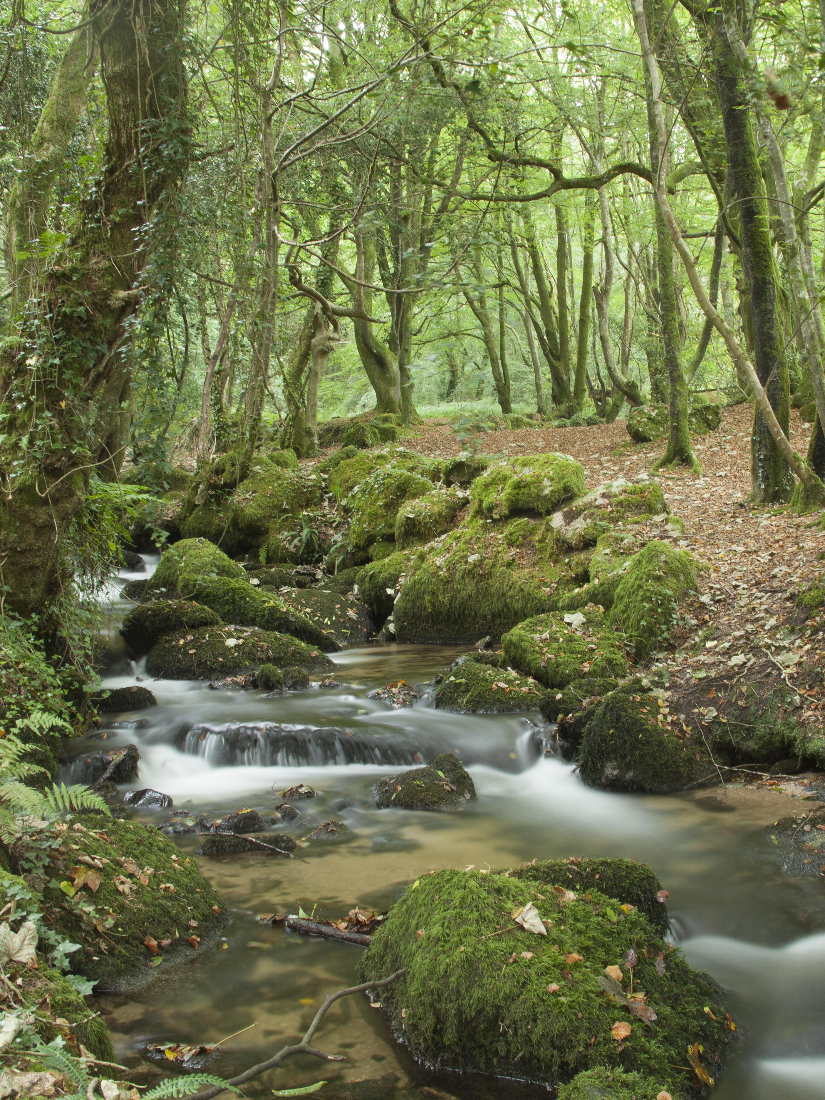 woodland stream near constantine  cornwall  u2013 victoria